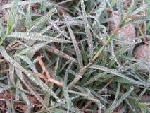 Makro des jungen Grases mit Tauwasser fällt auf Ackerland Stockbild