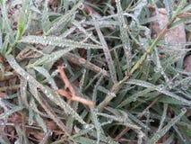 Makro des jungen Grases mit Tauwasser fällt auf Ackerland Stockfoto