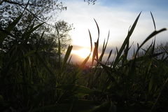 Makro des Naturrasens mit einem Sonnenuntergang auf Hintergrund lizenzfreies stockbild