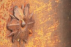Macro_detail1. Iron flower Stock Image