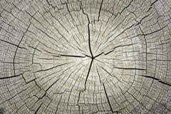 Makro-  drzewny przekroju poprzecznego tło fotografia stock