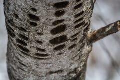 Makro- drzewo Fotografia Royalty Free