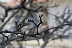 Makro- drzewo w tle, Zdjęcia Royalty Free