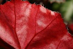 Makro- egzotycznych kwiatów miniaturowy świat Fotografia Royalty Free