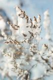 Makro einer Anlage im Schnee Lizenzfreie Stockfotografie