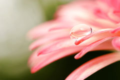 Makro einer Blume lizenzfreies stockbild