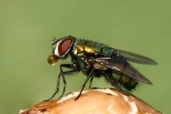 Makro einer Fliege stockbilder