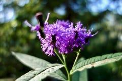 Makro einer Gruppe der purpurroten Blumen Stockfotografie