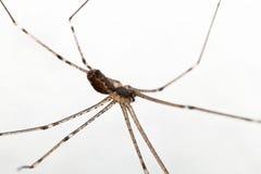Makro einer Spinne Stockbild