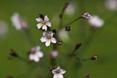 Makro einer wilden Blume Stockfotos