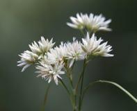 Makro einer wilden Blume Stockbilder