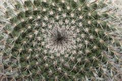 Makro eines Kaktus Lizenzfreie Stockbilder