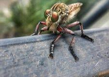 Makro eines Motte Hatchling Lizenzfreie Stockfotografie