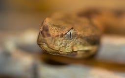 Makro eines Schlangenkopfes stockfoto