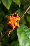 Makro exotische Blume in der Miniaturwelt Stockfotografie