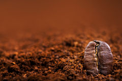 Makro för Arabicakaffebönor på ett brunt bakgrundsslut upp, makro Arkivbilder