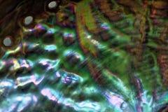 Makro för inre yttersida för Paua skal färgrik arkivfoton