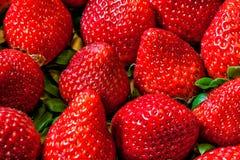 Makro för jordgubbebakgrundshög Royaltyfri Bild