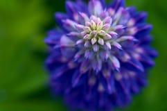Makro-flowerwith unscharfer Hintergrund Stockfotos