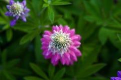 Makro-flowerwith unscharfer Hintergrund Stockfoto