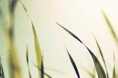 Makro- fotografia świeża trawa retro filtrujący wizerunek Obraz Royalty Free