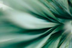 Makro- fotografia agawa liście Obrazy Stock