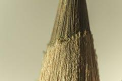 Makro- fotografia brown ołówek Brown prowadzenie zdjęcie royalty free