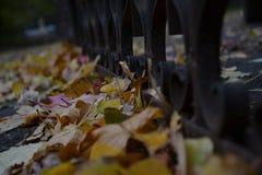 Makro- fotografia, Głownie chmurna, ogrodzenie Zdjęcia Royalty Free