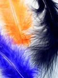 Makro- fotografia kolorowi piórka Obrazy Royalty Free