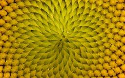 Makro- fotografia kwiat Obrazy Royalty Free