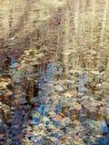Makro- fotografia liście w rzece Obraz Royalty Free