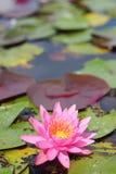 Makro- fotografia lotosowy kwiat ja może być projektem twój projekt grafika Zdjęcia Royalty Free