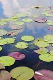 Makro- fotografia lotosowy kwiat ja może być projektem twój projekt grafika Zdjęcie Royalty Free