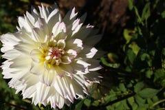 Makro- fotografia ogrodowy kwiatu zakończenie z szczegółami na zielonym tle fotografia stock