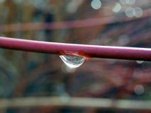 Makro- fotografia raindrop na gałąź Obrazy Royalty Free