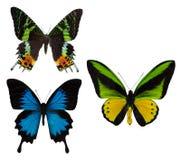 Makro- fotografia trzy tropikalnego motyla na bielu Obrazy Royalty Free