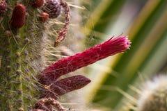 Makro- fotografii agawy liście w Hiszpania de Lloret mars Zdjęcie Royalty Free