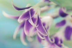 Makro- fotografii orchidea Obraz Stock