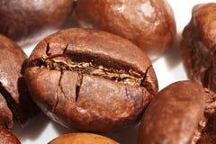 Makro för kaffebönor Arkivfoto