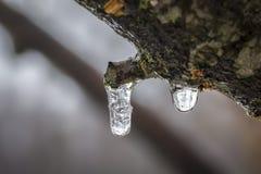 Makro fryst liten droppe på träd Royaltyfri Bild