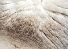 Makro- futerkowa tekstura od kota ` s nape Zdjęcia Royalty Free
