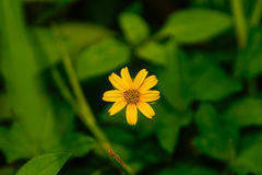 Makro gelbe Blumen Lizenzfreie Stockfotografie
