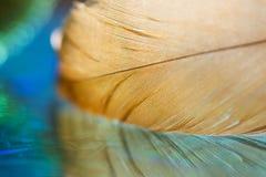 Makro goldene Feder mit Reflexion Schöne Abstraktion Selektiver Fokus Stockfotografie