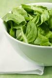 Makro grüner Salat Lizenzfreies Stockfoto