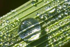 Makro grünes Blatt mit Tropfen Stockfotografie