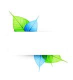 Makro grünes und blaues Blatt stockfotografie