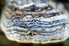 Makro- grzyb zdjęcie stock