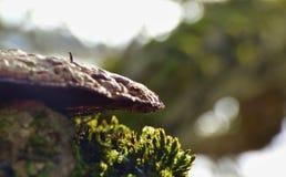 Makro- Grzybowy dorośnięcie na drzewie z mech zdjęcie royalty free