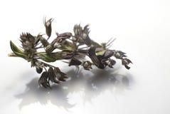 makro- herbata Zdjęcie Stock