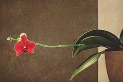 Makro- i zakończenie fotografie orchidea Obraz Royalty Free